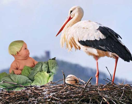 Les bébés ne naissent pas dans les choux !