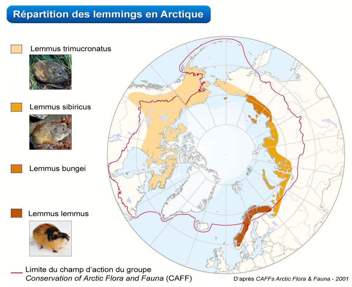 Sciences Claires - Les lemmings se suicident en masse