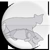 """<strong><span style='font-size:144%'> <a href=""""http://www.vulgarisation-scientifique.com/wiki/Pages.Chat de Schrödinger"""" style=""""color: black;"""" >Le chat de Schrödinger </a> </span></strong> <br clear='all' /><br clear='all' />Une expérience de pensée souvent mal comprise... <br clear='all' />                                  <a href=""""http://www.vulgarisation-scientifique.com/wiki/Pages.Chat de Schrödinger"""" style=""""color: black;font-weight: bold;"""" > Lire l'article</a>"""