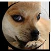 """<strong><span style=&#39;font-size:144%&#39;> <a href=""""http://www.vulgarisation-scientifique.com/wiki/Pages.Pourquoi les animaux lèchent-ils leurs blessures"""" style=""""color: black;"""" >Pourquoi les animaux lèchent-ils leurs blessures ? </a> </span></strong> <br clear=&#39;all&#39; /><br clear=&#39;all&#39; />La salive aide-t-elle à guérir ? <br clear=&#39;all&#39; /> &nbsp; &nbsp; &nbsp; &nbsp; &nbsp; &nbsp; &nbsp; &nbsp; &nbsp; &nbsp; &nbsp; &nbsp; &nbsp; &nbsp; &nbsp; &nbsp; &nbsp; &nbsp; &nbsp; &nbsp; &nbsp; &nbsp; &nbsp; &nbsp; &nbsp; &nbsp; &nbsp; &nbsp; &nbsp; &nbsp; &nbsp; &nbsp;  <a href=""""http://www.vulgarisation-scientifique.com/wiki/Pages.Pourquoi les animaux lèchent-ils leurs blessures"""" style=""""color: black;font-weight: bold;"""" > Lire l&#39;article</a>"""