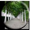 """<strong><span style='font-size:144%'> <a href=""""http://www.vulgarisation-scientifique.com/wiki/Pages.Pourquoi peint-on parfois les troncs d arbre en blanc"""" style=""""color: black;"""" >Pourquoi peint-on parfois les troncs d'arbre en blanc ? </a> </span></strong> <br clear='all' /><br clear='all' />Enquête sur un drôle de bouleau... <br clear='all' />                                  <a href=""""http://www.vulgarisation-scientifique.com/wiki/Pages.Pourquoi peint-on parfois les troncs d arbre en blanc"""" style=""""color: black;font-weight: bold;"""" > Lire l'article</a>"""