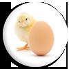 """<strong><span style=&#39;font-size:144%&#39;> <a href=""""http://www.vulgarisation-scientifique.com/wiki/Pages.Qui est apparu d abord l oeuf ou la poule"""" style=""""color: black;"""" >Qui est apparu d&#39;abord, l&#39;œuf ou la poule ? </a> </span></strong> <br clear=&#39;all&#39; /><br clear=&#39;all&#39; />Le problème n&#39;est pas n&#39;œuf, mais il mène toujours à des prises de bec... <br clear=&#39;all&#39; /> &nbsp; &nbsp; &nbsp; &nbsp; &nbsp; &nbsp; &nbsp; &nbsp; &nbsp; &nbsp; &nbsp; &nbsp; &nbsp; &nbsp; &nbsp; &nbsp; &nbsp; &nbsp; &nbsp; &nbsp; &nbsp; &nbsp; &nbsp; &nbsp; &nbsp; &nbsp; &nbsp; &nbsp; &nbsp; &nbsp; &nbsp; &nbsp;  <a href=""""http://www.vulgarisation-scientifique.com/wiki/Pages.Qui est apparu d abord l oeuf ou la poule"""" style=""""color: black;font-weight: bold;"""" > Lire l&#39;article</a>"""