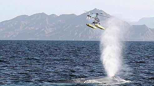 Hélicoptère de collecte de morve de baleine