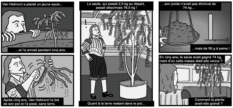 Plante vivant sans terre awesome voici mes tillandsia for Rempotage bulbe amaryllis